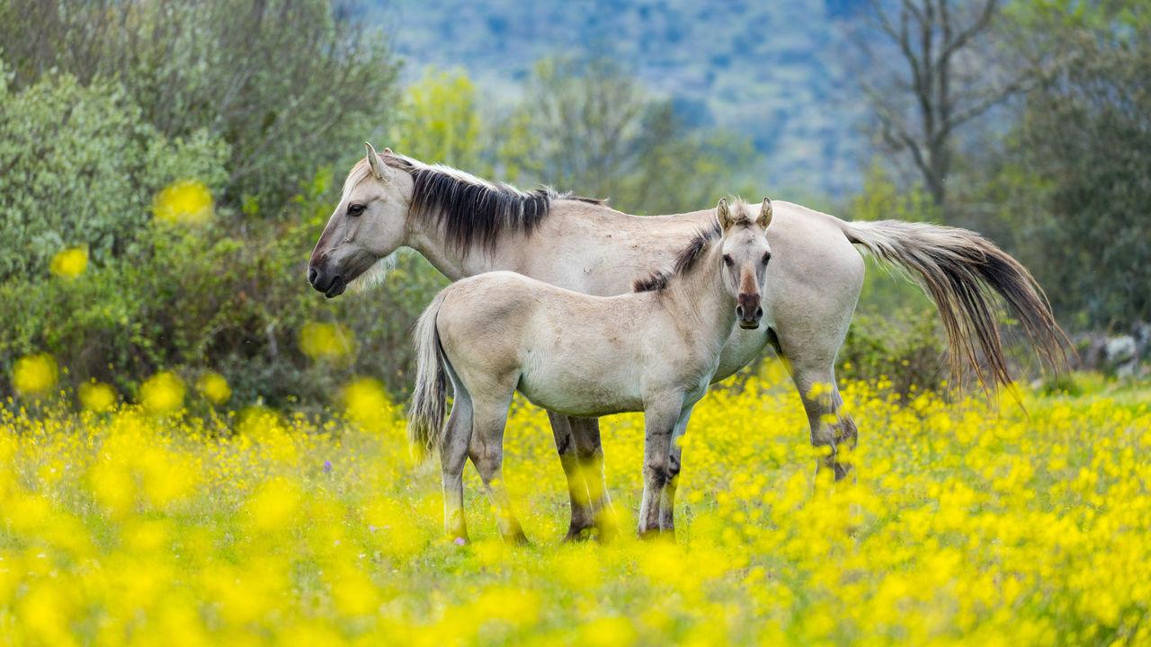 Wolven- en gierensafari Côa vallei Portugal - Matoke Tours